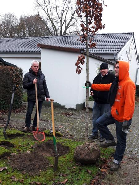 Baumpflanzen_6